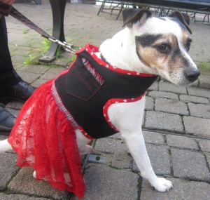 the posh dog clothing company upcycled lace harness