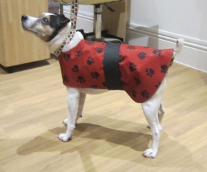 the posh dog clothing company waterproof coat